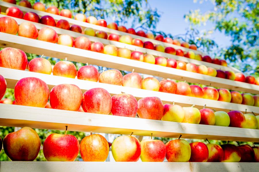 Maison de pommes, producteur Normandie
